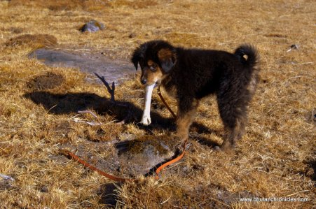 Laya finds a bone at a yakherder camp