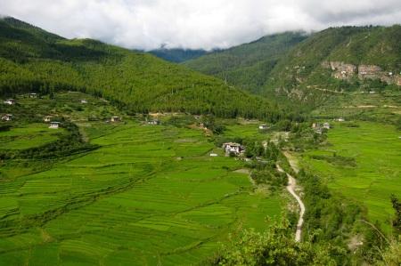 Rice paddies above the Paro balley